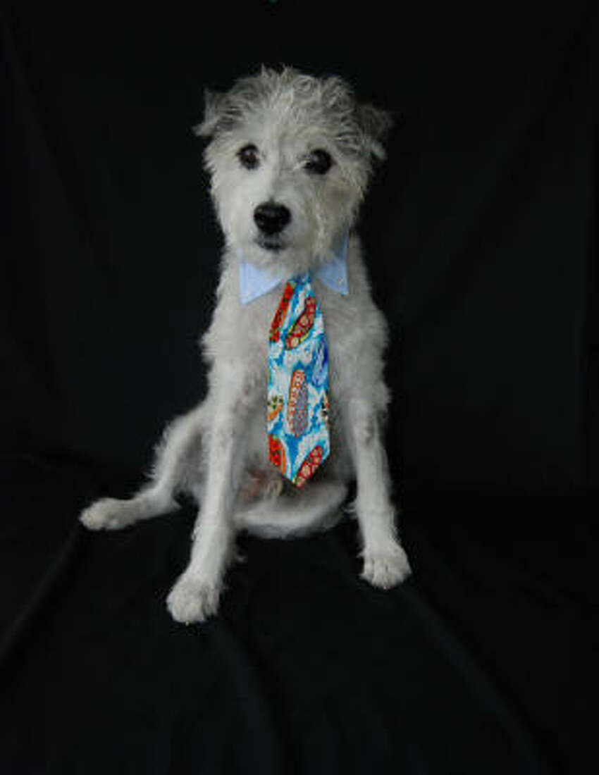 Dogs need power ties, too. Peteydesigns.com has a selection of neckwear for your pooch's most-important board meetings.