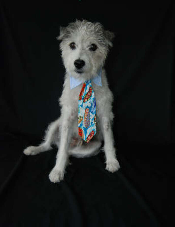 Dogs need power ties, too. Peteydesigns.com has a selection of neckwear for your pooch's most-important board meetings. Photo: Rachel Wilson, Petey Designs