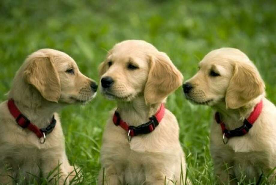 Domestic dogs: 20 years. Smaller dogs are more likely to live longer than big dogs. Photo: Saniphoto, Fotolia.com