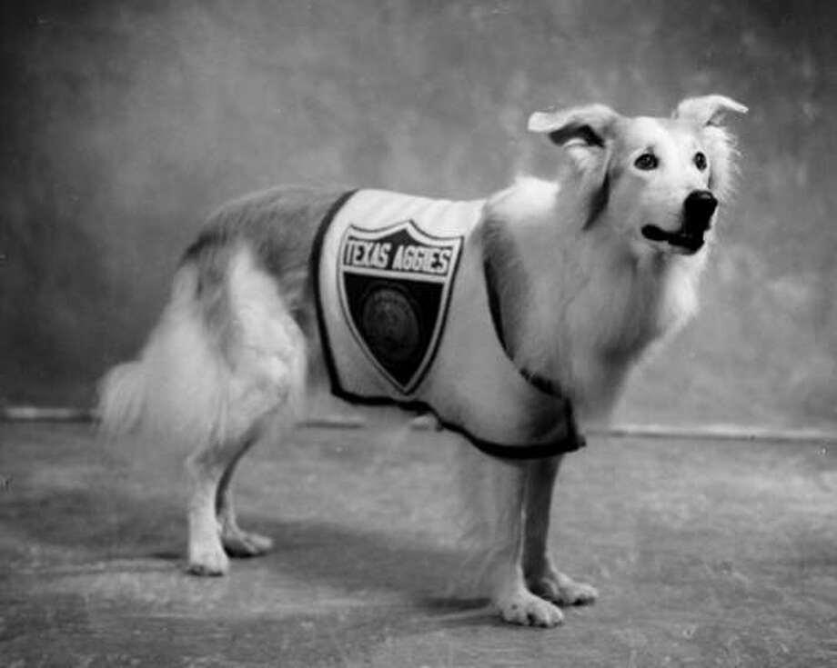 Reveille II was a German shepherd donated to the school in 1952 after efforts to raise money to replace the original dog fell short. Reveille II began serving in 1952. She died in 1966. Photo: The Battalion