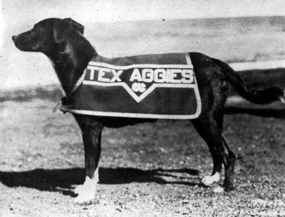Reveille I gained her name from howling along with the corps bugler as he awoke the cadets with reveille. She was a mongrel rescued from the roadside in the early 1930s. She died in January 1944, and received a formal military funeral. Photo: The Battalion