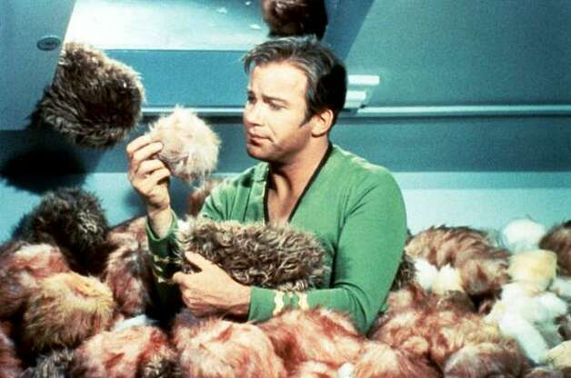 Captain Kirk, portrayed by actor William Shatner, is surrounded by tribbles during the classic The Trouble With Tribbles episode of Star Trek. Photo: Associated Press