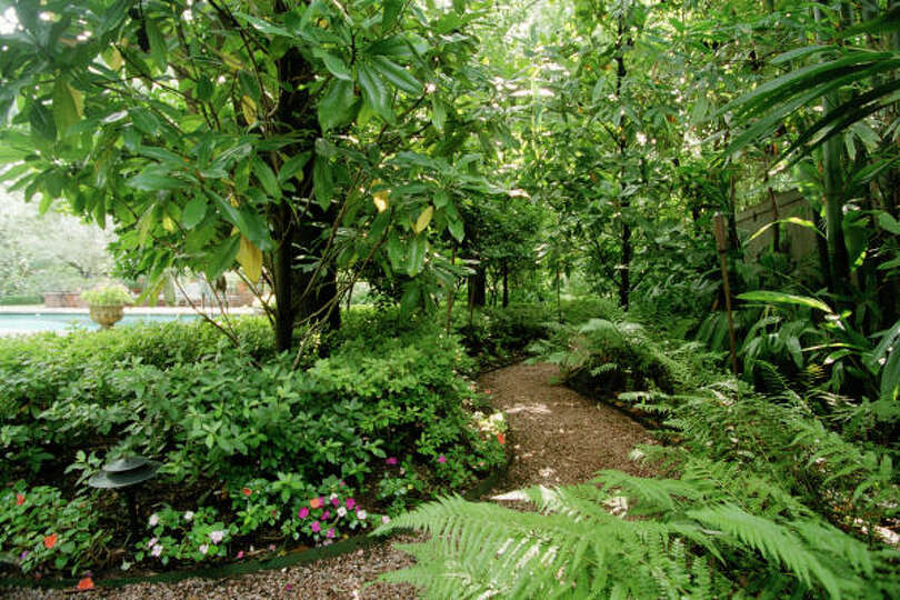 A secret shade garden with timber bamboo magnolias and