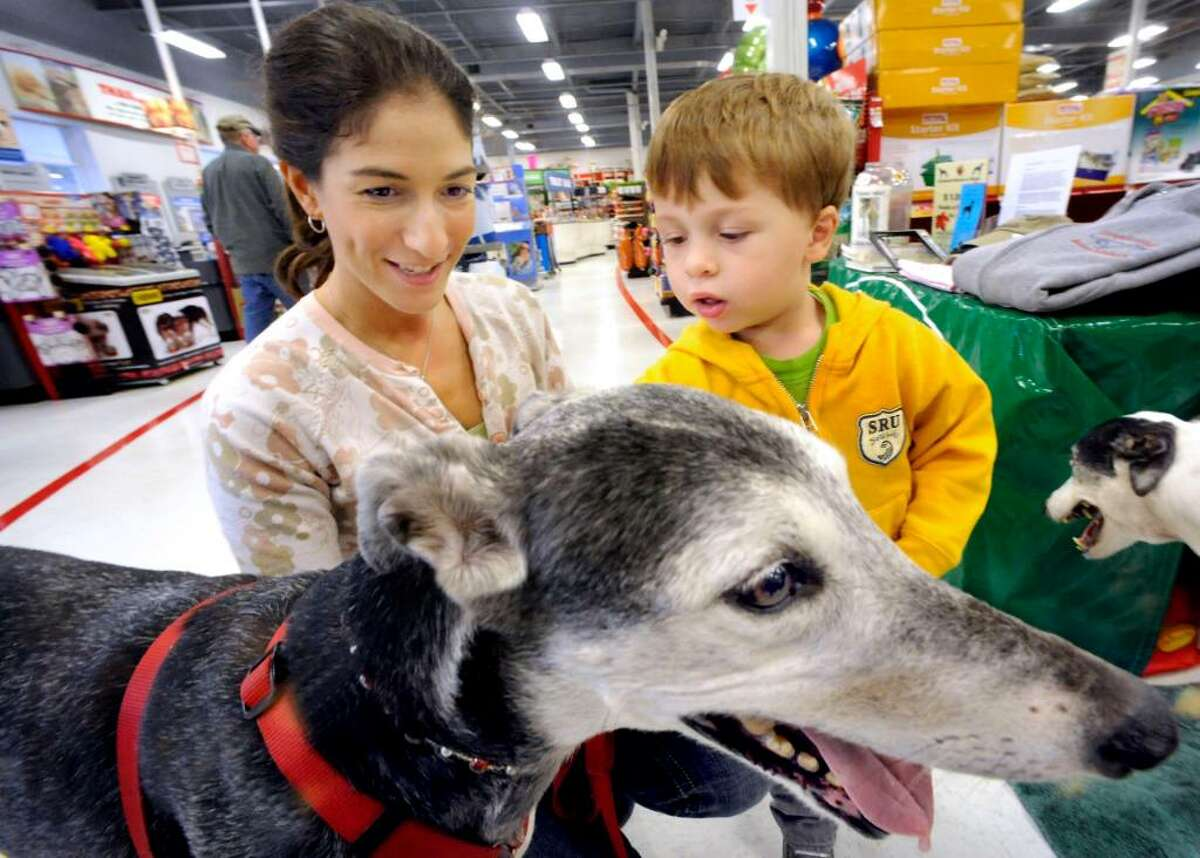Karen Tomanio and her son, Caden McLeod, 3, of Southbury, admire Allie, one of the retired racing greyhounds, at Petco, in Brookfield, on Saturday, Oct.10,2009, during an adoption event.