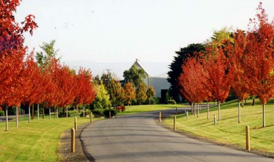 The entryway to Australia's Green Point Winery shows the stunning colors of fall, which Down Under is March-April. The area of the Yarra Valley called Green Point stays greener longer because the soil retains moisture more than the surrounding areas. Photo: Green Point Winery