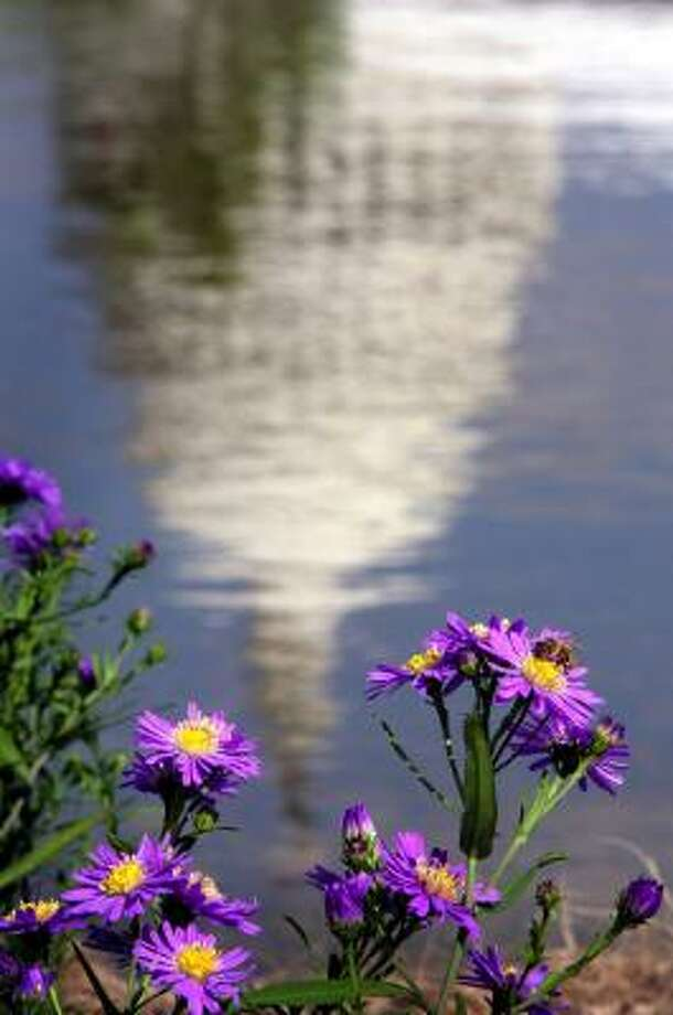 Framed by purple asters, the Capitol dome is reflected in the pond of the newly opened National Garden at the U.S. Botanic Garden in Washington. Photo: Melina Mara, Washington Post