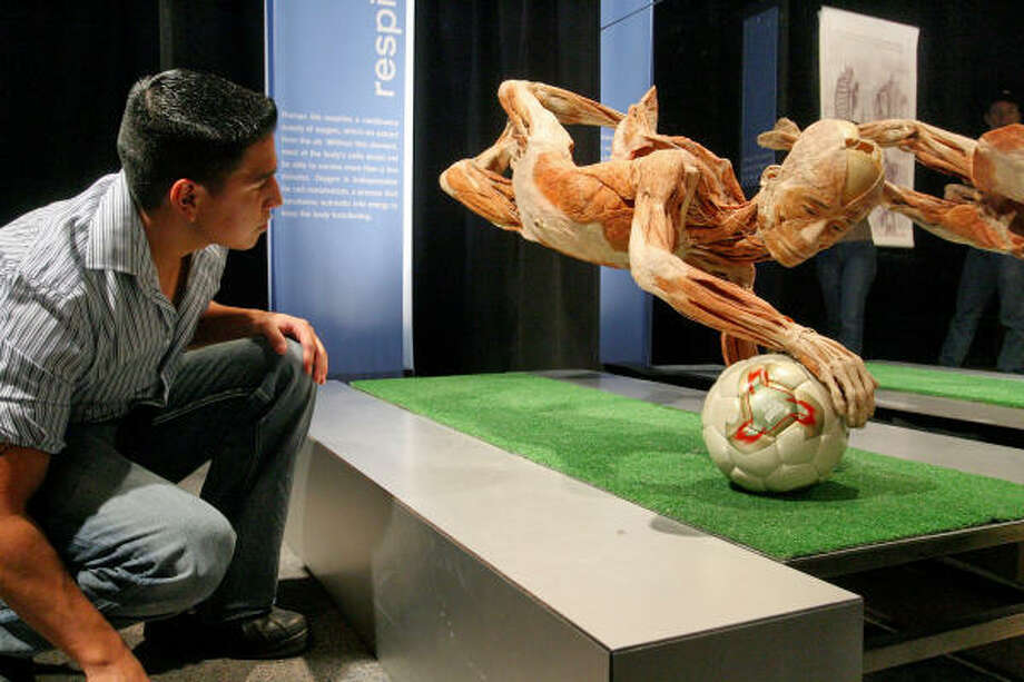 A suspended body stretching for a soccer ball captivates Mario Gonzales just after midnight Sunday at Body Worlds 3 at the Museum of Natural Science. Photo: Bill Olive, Bill Olive-for The Chronicle