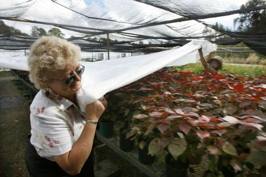 Horticulturist Dee Howell and her staff at the city of Houston Parks and Recreation Department spent Wednesday covering potted plants at the department's greenhouse. The low will reach 33 tonight. Photo: CARLOS ANTONIO RIOS, Chronicle