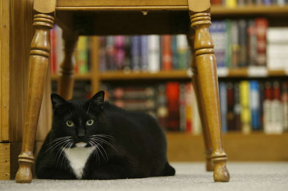 The mighty Morty throws his weight around at Half Price Books in Clear Lake. Photo: Kevin Fujii, Chronicle
