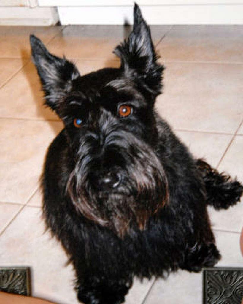 dog attacks stun anger silverlake neighbors houston chronicle