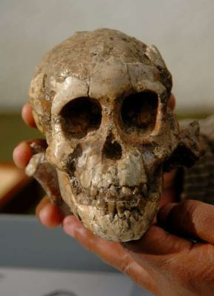 fossil of baby who died 3.3 million years ago found - houston, Skeleton