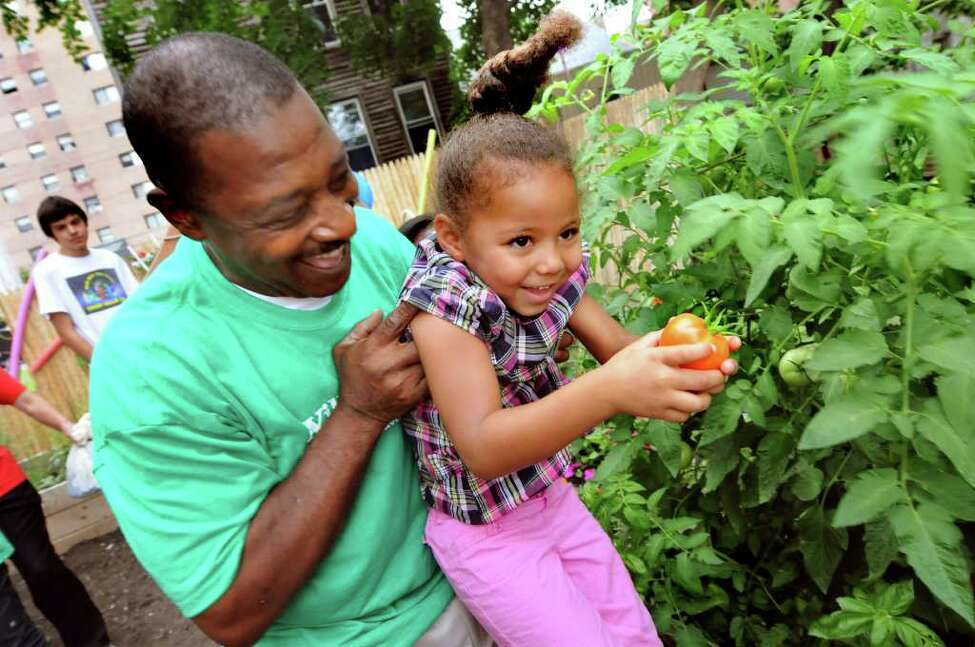 Tatiana Tune, 4, of Albany holds up a tomato she picked with the help of Willie White, president and founder of AVillage, at the newly dedicated children's garden on Thursday, Aug. 11, 2011, in Albany, N.Y. (Cindy Schultz / Times Union)