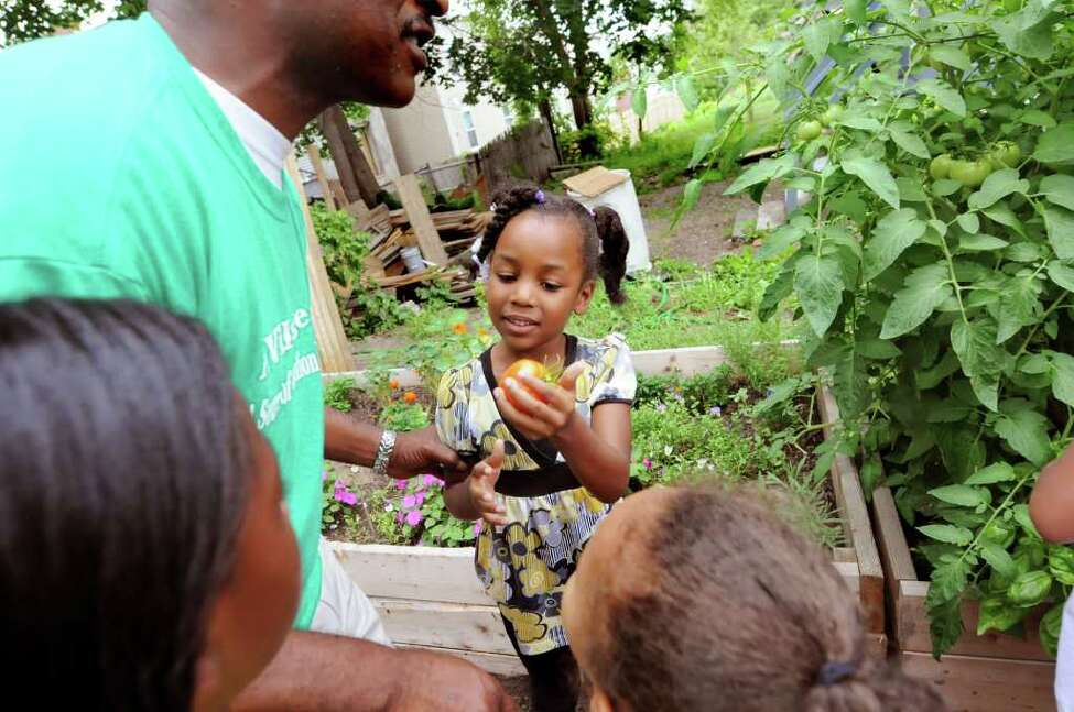 Heaven Williams, 5, of Albany holds a tomato at the newly dedicated children's garden on Thursday, Aug. 11, 2011, in Albany, N.Y. (Cindy Schultz / Times Union)