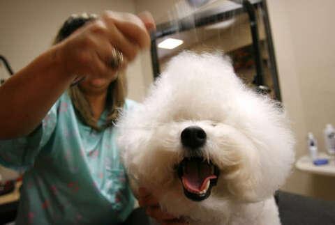 Pet resorts peddle canine comfort - Houston Chronicle