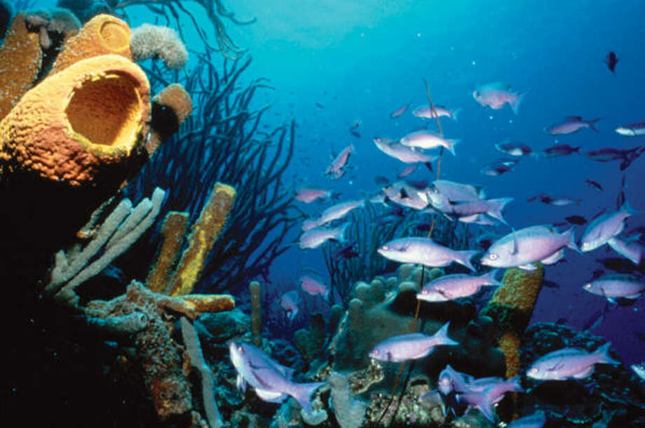 An underwater scene off the coast of Bonaire. Photo: Associated Press
