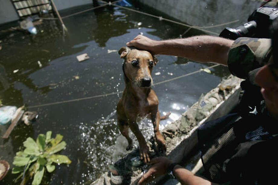 A Navy sailor rescues a dog at a flooded area in Villahermosa, eastern Mexico, on Nov. 9. Photo: Eduardo Verdugo, AP