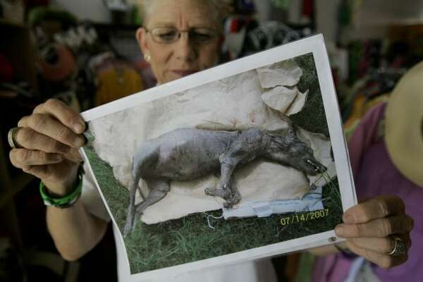 Phylis Canion holds a photo of what she thinks could be a chupacabra in Cuero, Texas. She found the strange looking animal dead outside her ranch and thinks it is responsible for killing many of her chickens.
