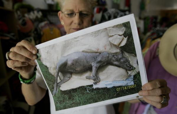 Houston 'chupacabra' sighting could be real animal purposely bred