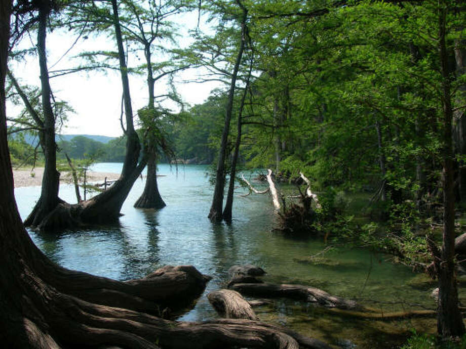 Bald cypress trees line the Frio River in Garner State Park. Photo: Eileen McClelland, Chronicle