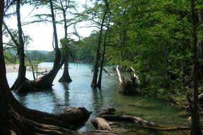 Bald cypress trees line the Frio River in Garner State Park.
