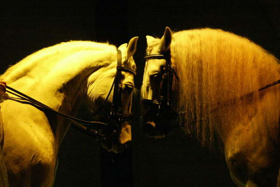 Cavaliablends beautiful horses with a Cirque du Soleil approach. Photo: Kevin Fujii, HOUSTON CHRONICLE