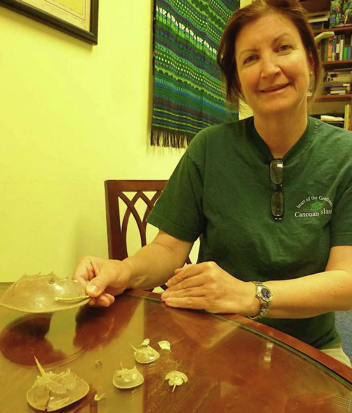 Jennifer Mattei, an associate professor of biology at Sacred Heart University in Fairfield, with a tagged horseshoe crab shell and other shell examples of the crabs.