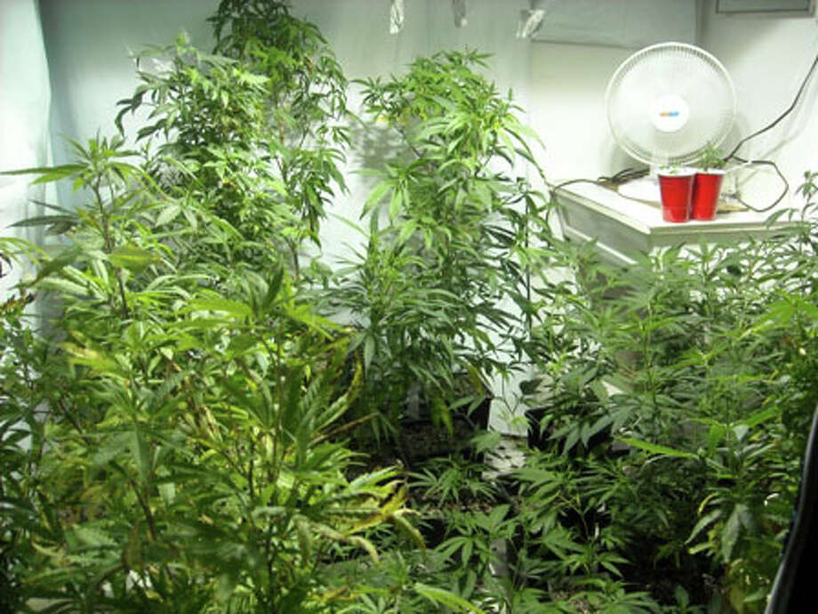 Two Monroe, Conn. residents were arrested Monday after police raided a Spinning Wheel Road home and found more than 2 1/2 pounds of marijuana along with 180 marijuana plants, hallucinogenic mushrooms and growing equipment, state police said. Police said Curt Porell, 27, and Kimberly Finocchio, 41, were charged with multiple offenses including operation of a drug factory, possession of drug paraphernalia and possession of more than 1 kilogram of marijuana with intent to sell. Photo: State Police