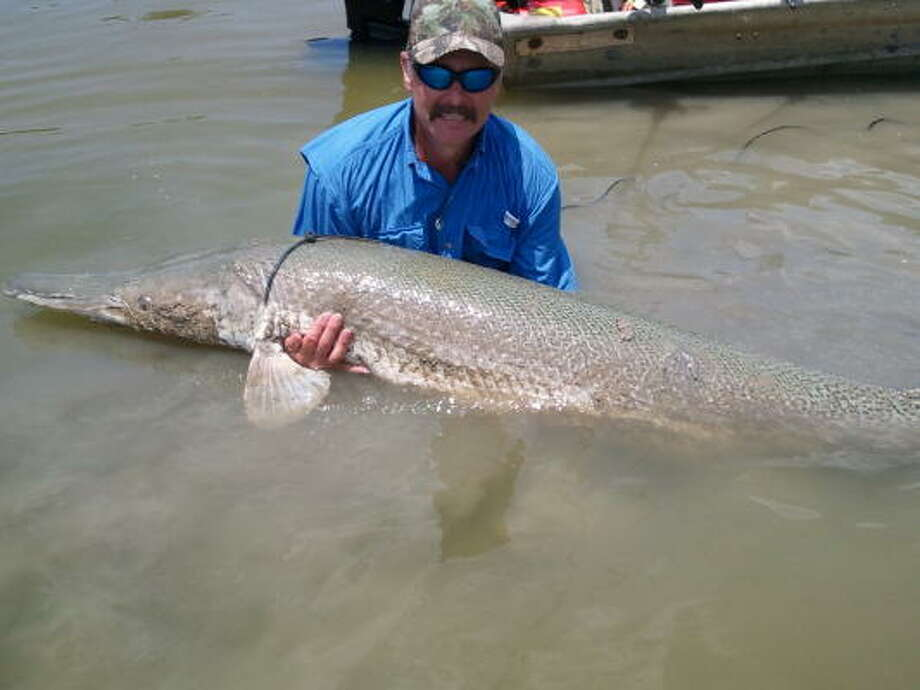 Angler Joseph Williams of Cleveland prepares to release an 88-inch, 200 plus-pound alligator gar he caught. The fish is a pending catch-and-release state record for the species. Photo: Photo Courtesty Of Ronny Smith