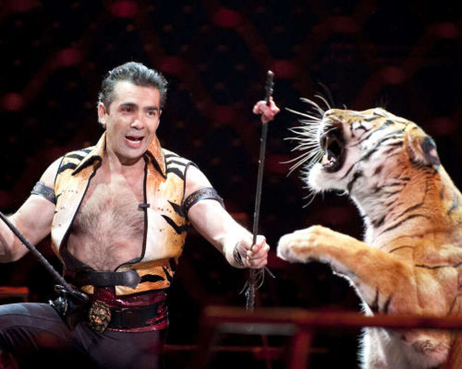 Daniel Raffo and his tigers perform in the Ringling Bros. and Barnum & Bailey show. The circus will be at Reliant Stadium through July 24. Photo: Feld Entertainment 2010