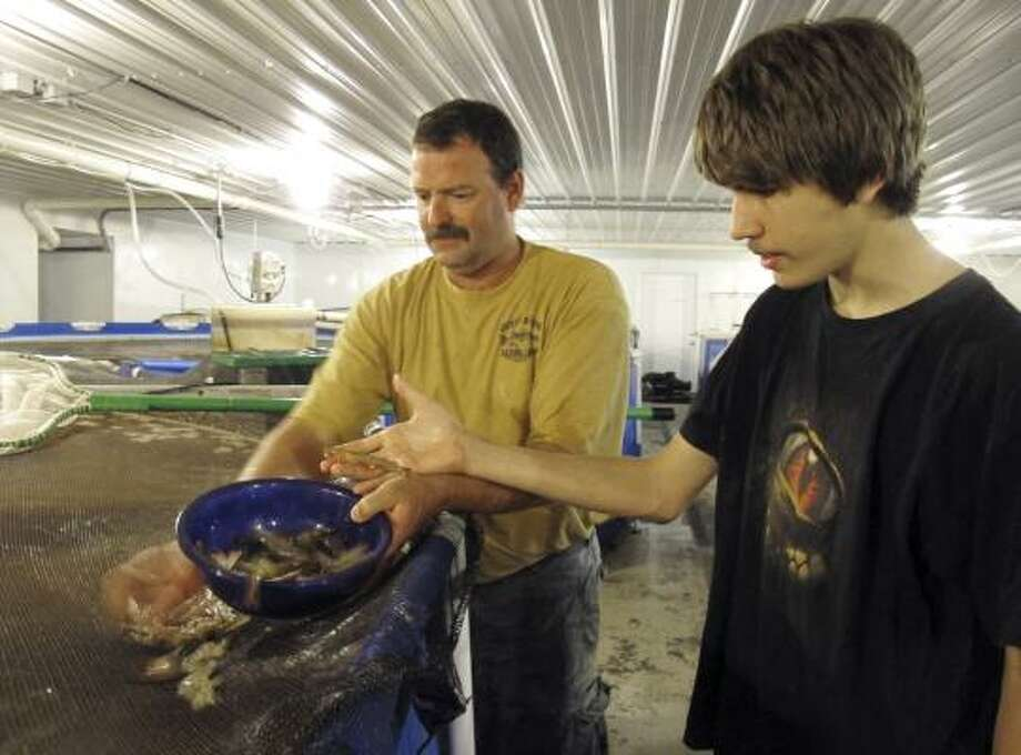 Darryl Brown, left, and his son, Levi, hold Pacific white shrimp they raise in Fowler, Ind. The government wants to open up federal coastal waters to fish and shellfish farms. Photo: Rick Callahan:, Associated Press