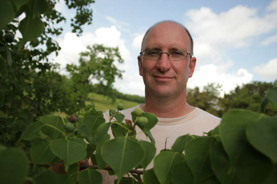 Rice professor Evan Siemann says most of the troublemaking Chinese tallow trees were brought to the U.S. in the early 1900s by federal biologists. Photo: Rice University