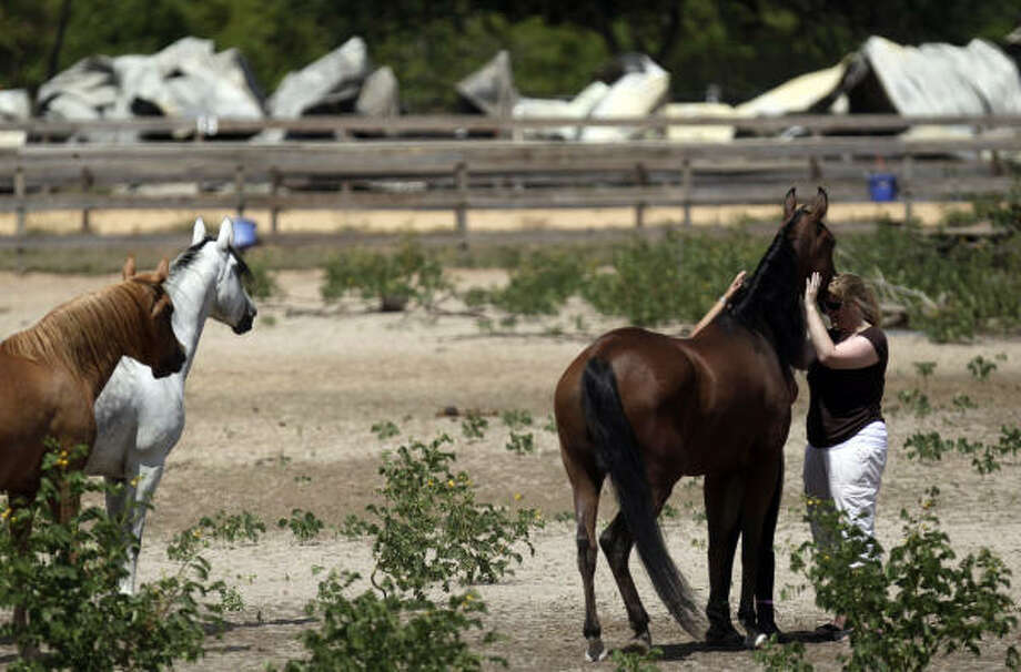 Christine Huestis comforts one of the horses that survived the blaze at Goslin-Nix Training Center in Magnolia on Tuesday. Photo: Johnny Hanson, Chronicle