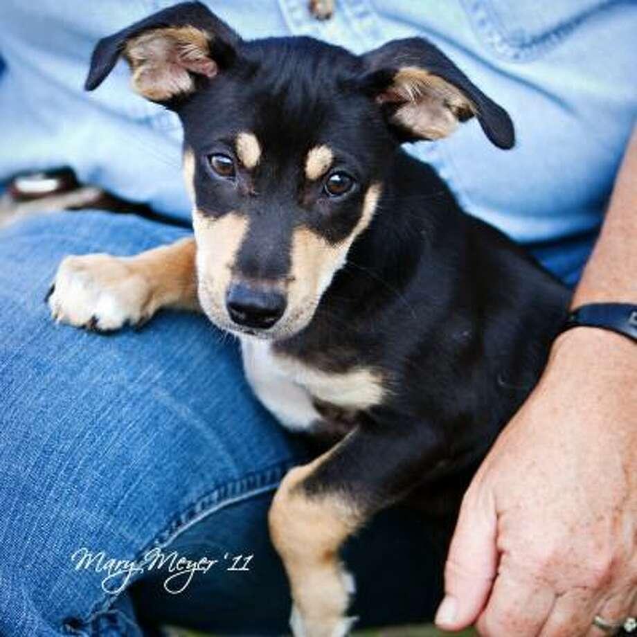 Dallas the Dog