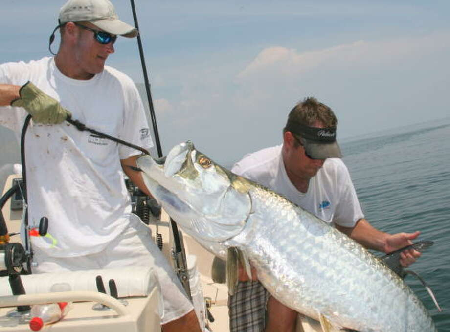 August through October produces the best opportunities for Texas anglers to encounter migrating schools of 80- to 200-pound tarpon in Texas near-shore waters. Photo: Shannon Tompkins, Chronicle