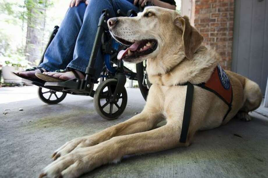 Shannon Martin relies on her service yellow Lab Noble. Photo: Patrick T Fallon, Houston Chronicle