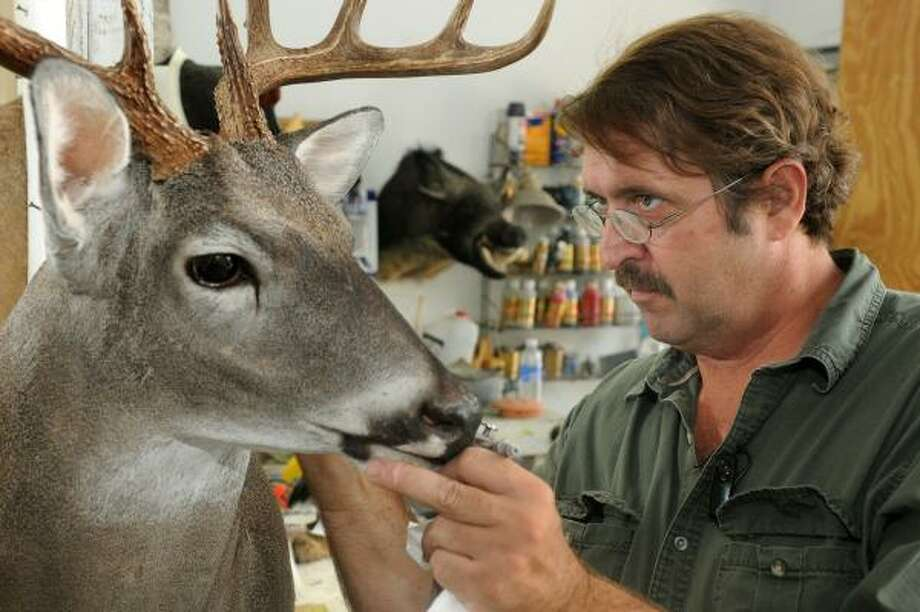 Brian Kalich, of Brian's Taxidermy, in Tomball, puts the finishing touches on a white-tailed deer. Photo: Jerry Baker, For The Chronicle