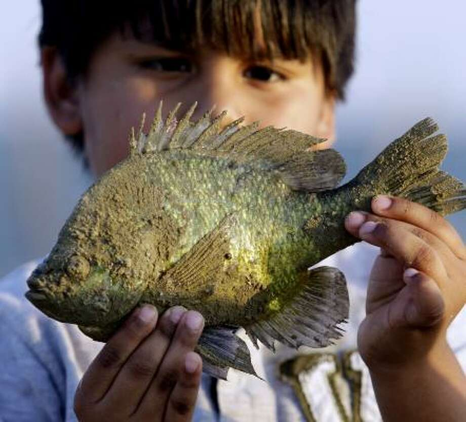 Joe Padilla poses with a fish he caught at Falcon Lake in Zapata, Texas. Many tourists stayed away from the lake after the disappearance of David Hartley last year. Now, business is picking up. Photo: Eric Gay, Associated Press