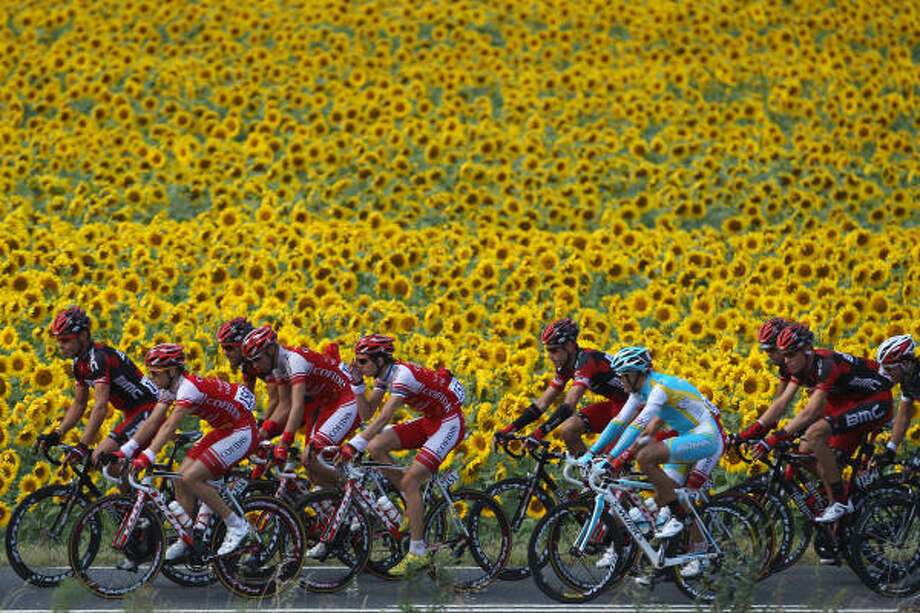 The peloton passes by sunflower fields outside Brives during Stage 7 of the 2011 Tour de France from Le Mans to Chateauroux. Photo: Michael Steele, Getty