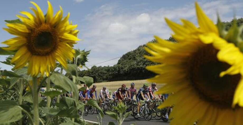 The pack with Johnny Hoogerland of The Netherlands, wearing the best climber's dotted jersey, passes a field of sunflowers during the seventh stage. Photo: Laurent Cipriani, Associated Press