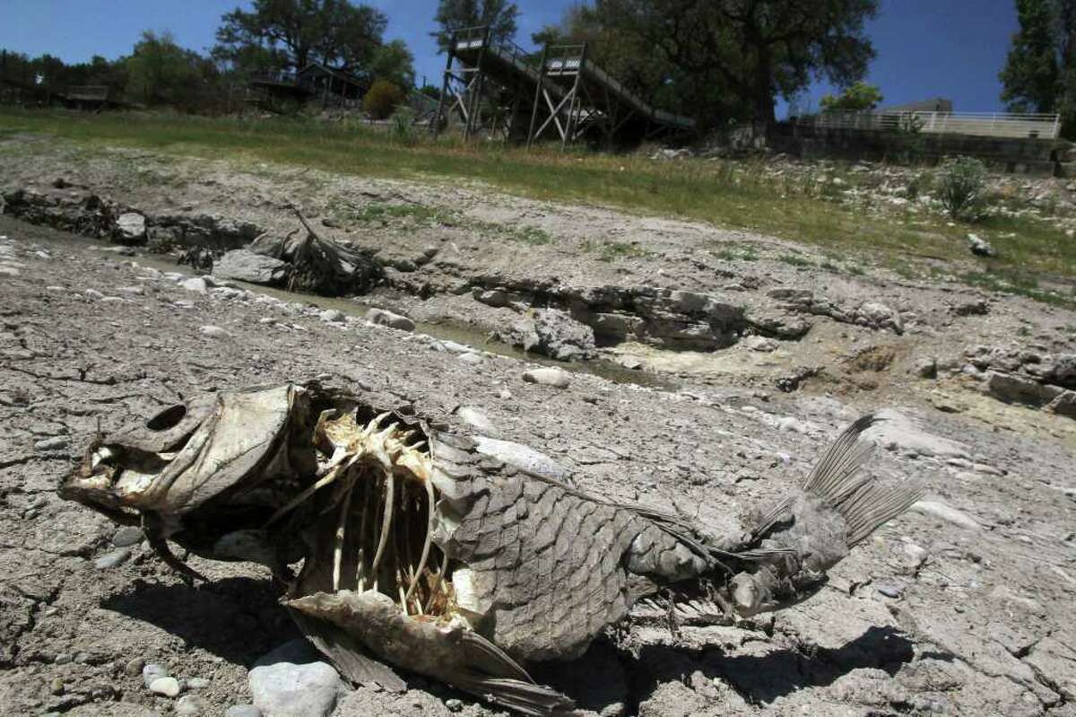 A dead, dried out fish lies in what was once a flowing Medina River north of Medina Lake. The Lake is down more than 30 feet and the Medina River, which flows into Mdina Lake, is completely dry in some areas.