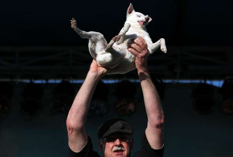 A contestant holds up his ugly dog. Photo: Justin Sullivan, Getty