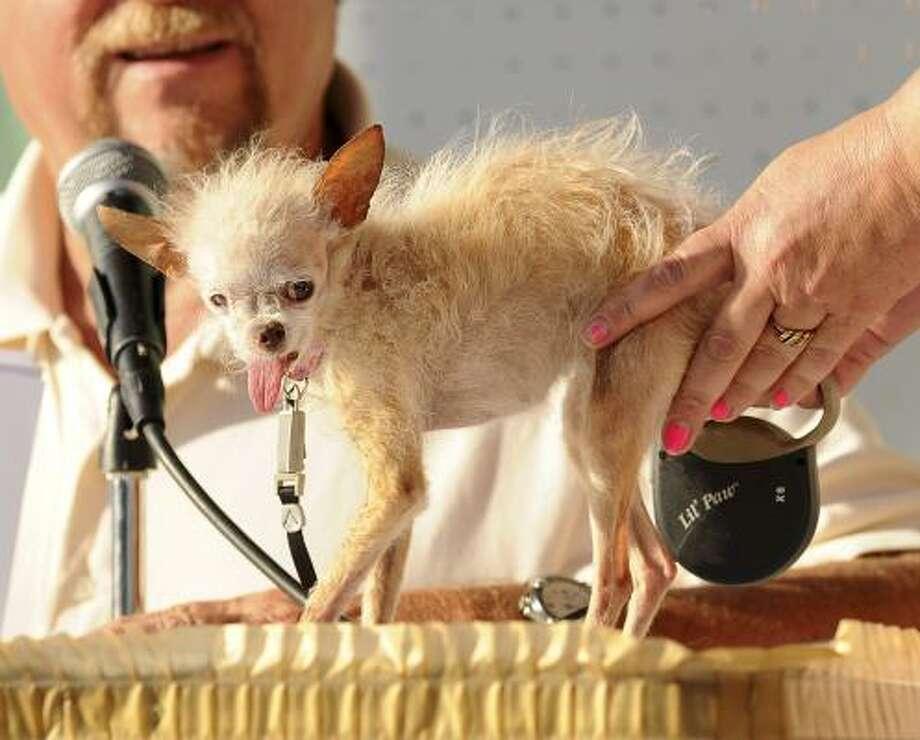 A judge evaluates Yoda. Photo: Noah Berger, Associated Press