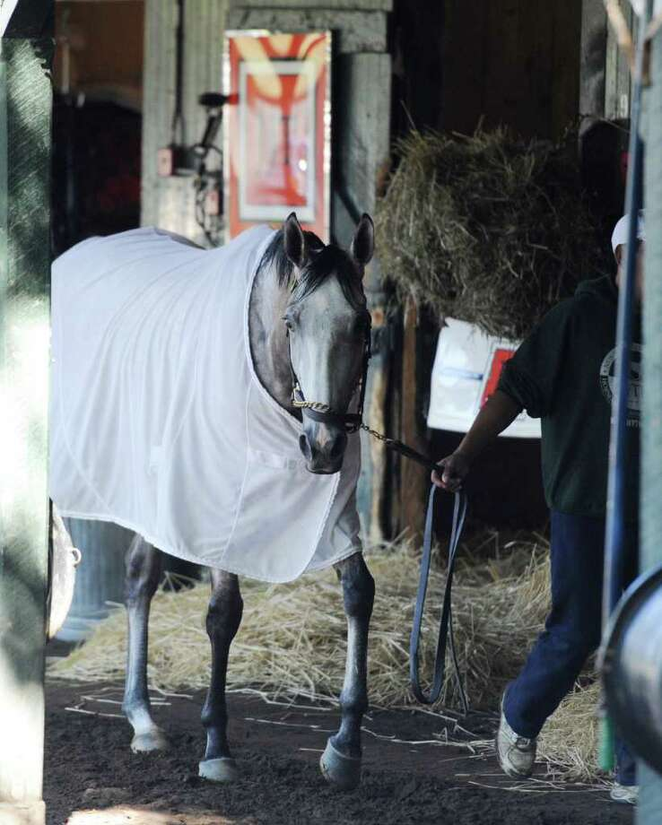 Winter Memories cools out in the barn of trainer J.J. Toner on Saratoga Race Course in Saratoga Springs, N.Y. Aug, 17, 2011 in preparation for the Travers.   (Skip Dickstein / Times Union) Photo: SKIP DICKSTEIN