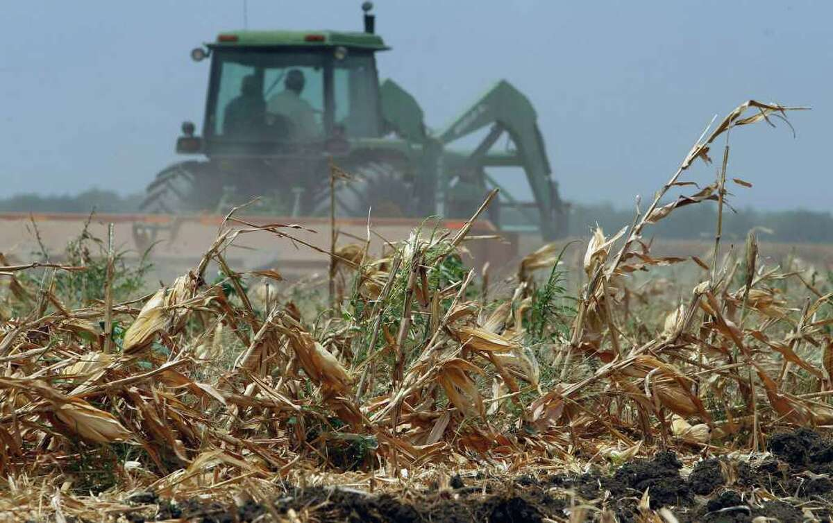 A tractor plows a recently harvested corn field near Hondo. The drought has hit the corn crop to the tune of $327 million.