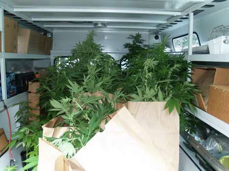 Milford police and DEA agents seized 76 marijuana plants and charged four residents of a Baxter Lane home with operating a drug factory and other drug charges after a raid Friday, Aug. 19, 2011. Photo from Milford police. Photo: Contributed Photo