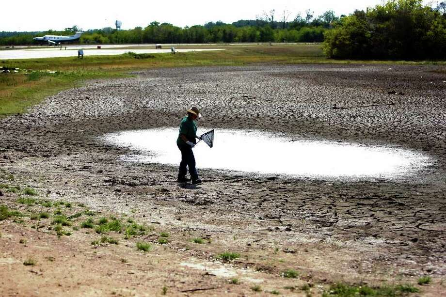 "Walking around a 25-foot by about 15-foot section of what was a 15-acre pond, Roberta Pitzak, 61, makes an attempt to save the last hand-full of turtles that have survived the drying pond at David Wayne Hooks Airport  Thursday, Aug. 18, 2011, in Spring.  ""Why don't more people care,"" Pitzak said who has been feeding the animals at the pond for about eight years. ""Why don't more people care just a little bit. It's hot and animals are suffering."" Pitzak said she has slowly watched the pond dry up and   has seen ducks and turtles that she had identify with disappear because of the drought conditions. ""Some people think I'm crazy,"" she said. ""But I'm just trying to help these animals. I think more people should want to help them."" ( Johnny Hanson / Houston Chronicle ) Photo: Johnny Hanson, Staff / © 2011 Houston Chronicle"