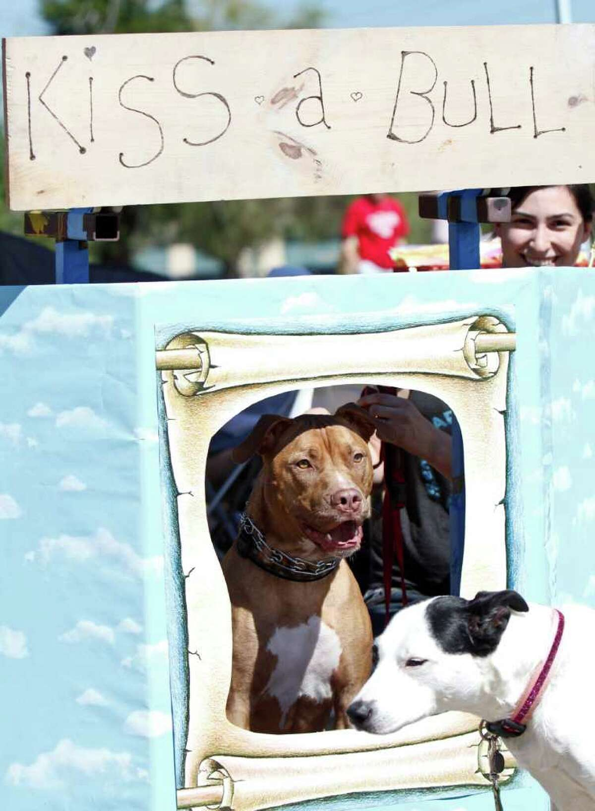 A pit bull poses in the kissing booth.