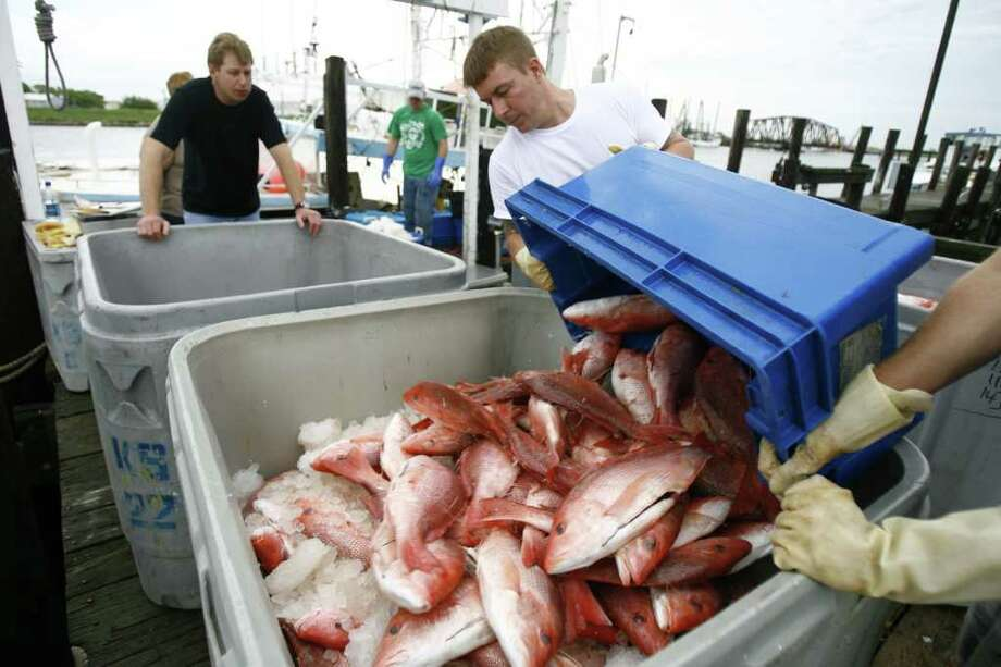 The average weight of snapper retained by anglers has jumped, according to surveys, from 3.4 pounds in 2007 to 5.34 pounds in 2010. Photo: Nick De La Torre, HOUSTON CHRONICLE / Houston Chronicle
