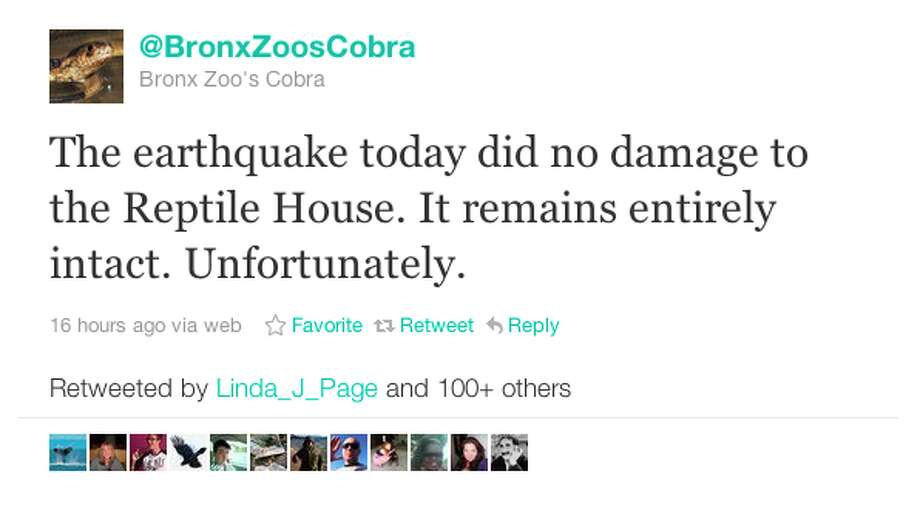 The Bronx Zoo Cobra was more than a little disappointed. Photo via Twitter/@BronxZoosCobra Photo: Twitter/@BronxZoosCobra