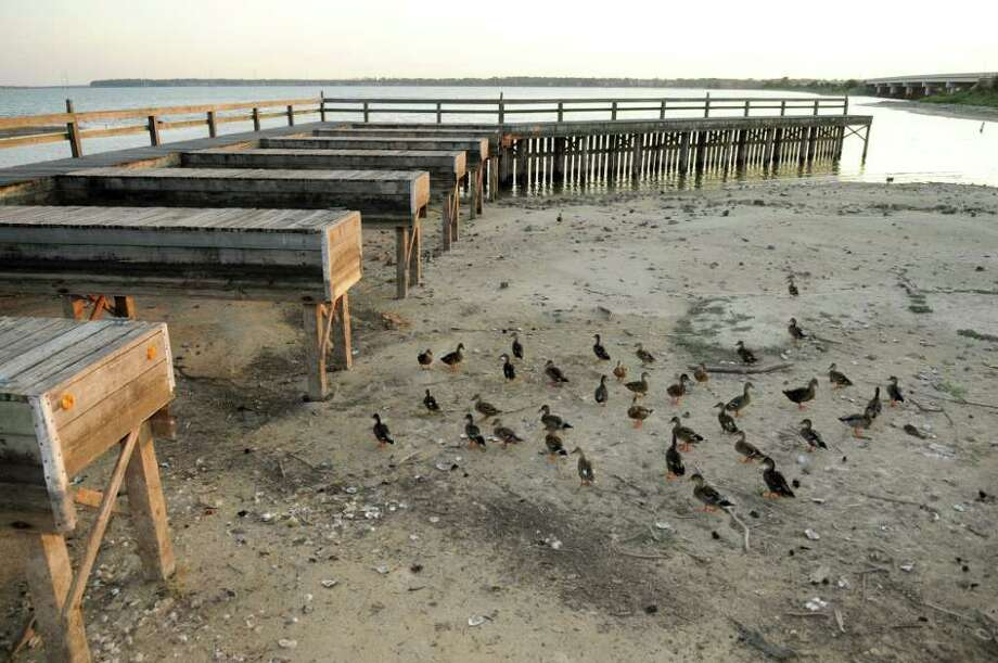 The unusually low water level of Lake Houston has turned part of the dry lake bottom beneath the pier at Cedar Landing Marina into a beach for ducks. Photo: Jerry Baker, Freelance